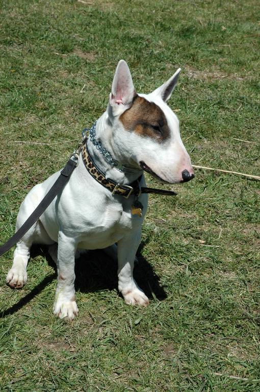 Stonehill Kennel dog training
